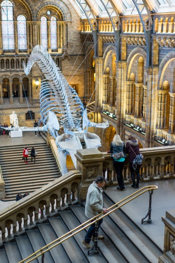 The view from the top floors of the Natural History Museum are worth a visit alone!, Natural History Museum, London, 05/12/2017