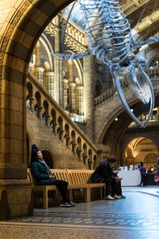 The Natural History Museum is the perfect place to get away from the hustle and bustle of central London, Natural History Museum, London, 05/12/2017