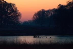 07:18, Birds stood on the frozen lake, Richmond Park, 12/12/2017