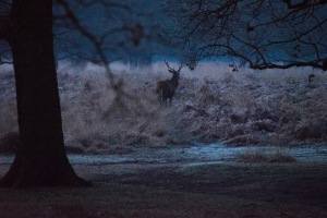 07:31, Not sure why but this deer looks like it was also wondering why the bloody hell it was doing stood in the middle of a field in the freezing cold, Richmond Park, 12/12/2017