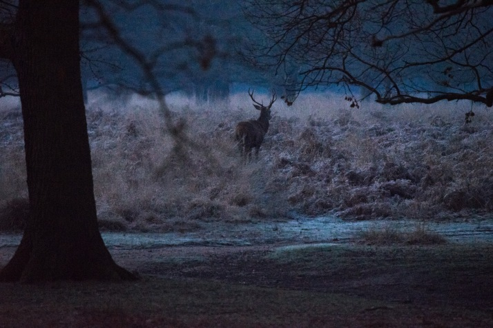 2017-12-12 - Richmond Park-004