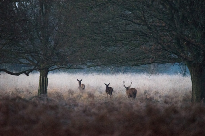 2017-12-12 - Richmond Park-005