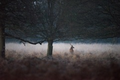 2017-12-12 - Richmond Park-006