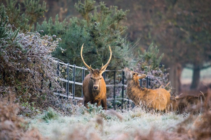 2017-12-12 - Richmond Park-007