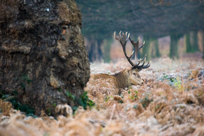 2017-12-12 - Richmond Park-010