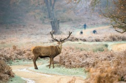 08:13, Yes you can take my picture, Richmond Park, 12/12/2017
