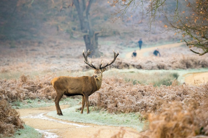 2017-12-12 - Richmond Park-013