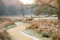 08:13, Bloody photographer stood in my spot who does he think he is?, Richmond Park, 12/12/2017