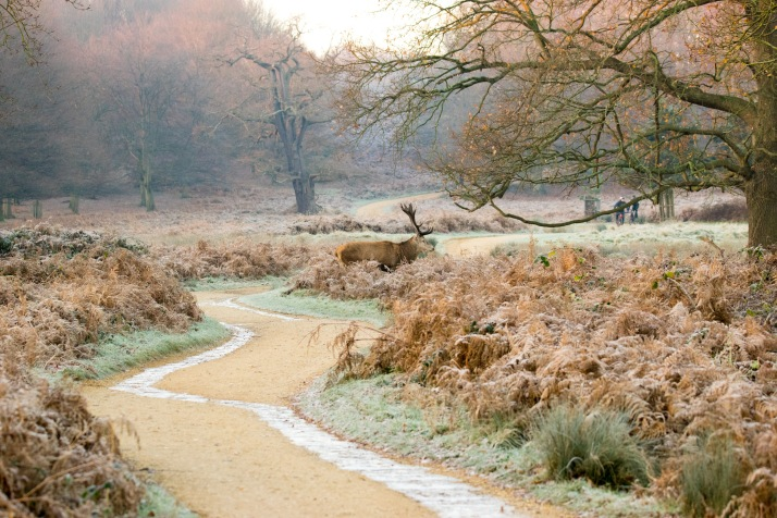 2017-12-12 - Richmond Park-014