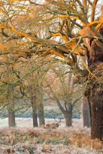08:14, Better not be in my spot when I get back, Richmond Park, 12/12/2017