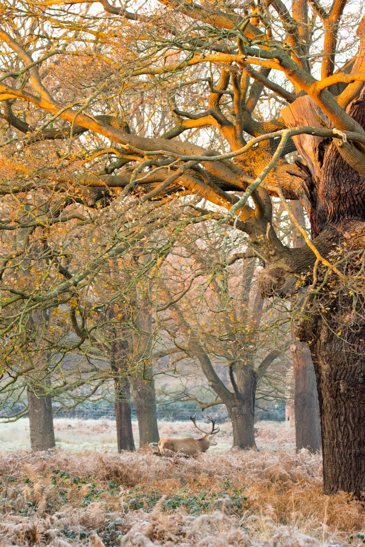 2017-12-12 - Richmond Park-015