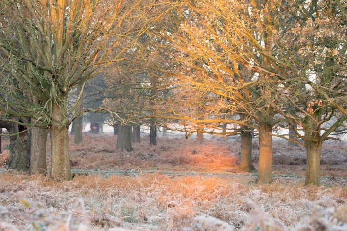 2017-12-12 - Richmond Park-016