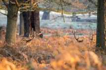 08:39, Not convinced it's the most effective hiding place, Richmond Park, 12/12/2017