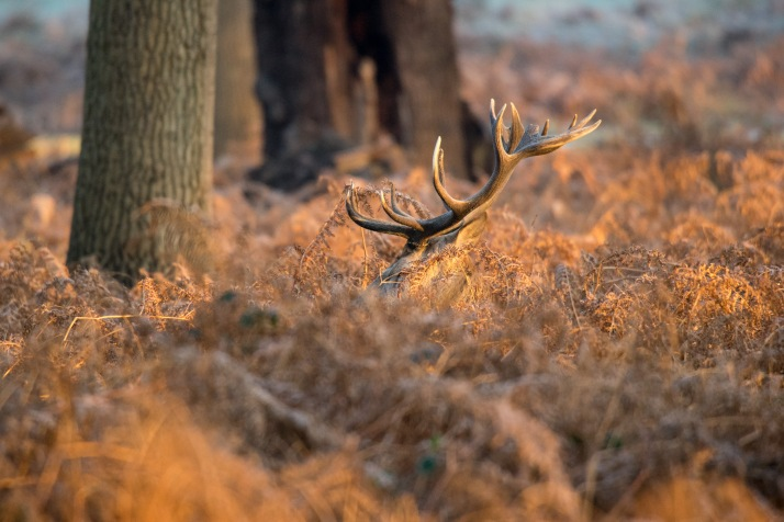 2017-12-12 - Richmond Park-018