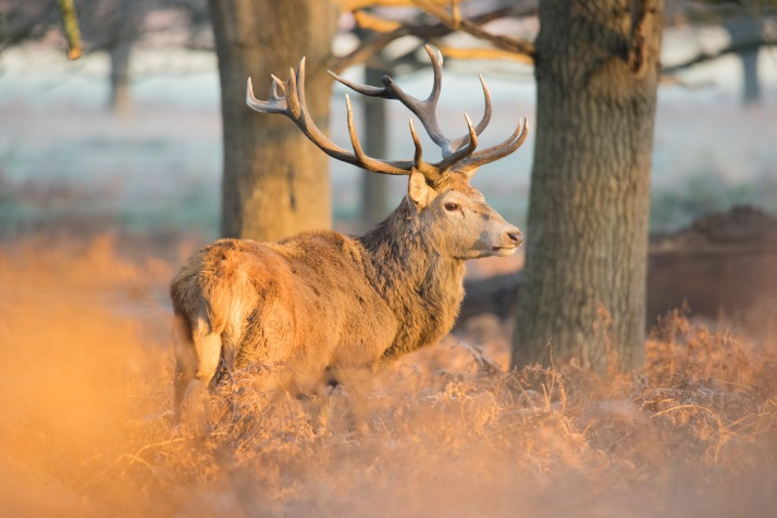2017-12-12 - Richmond Park-021