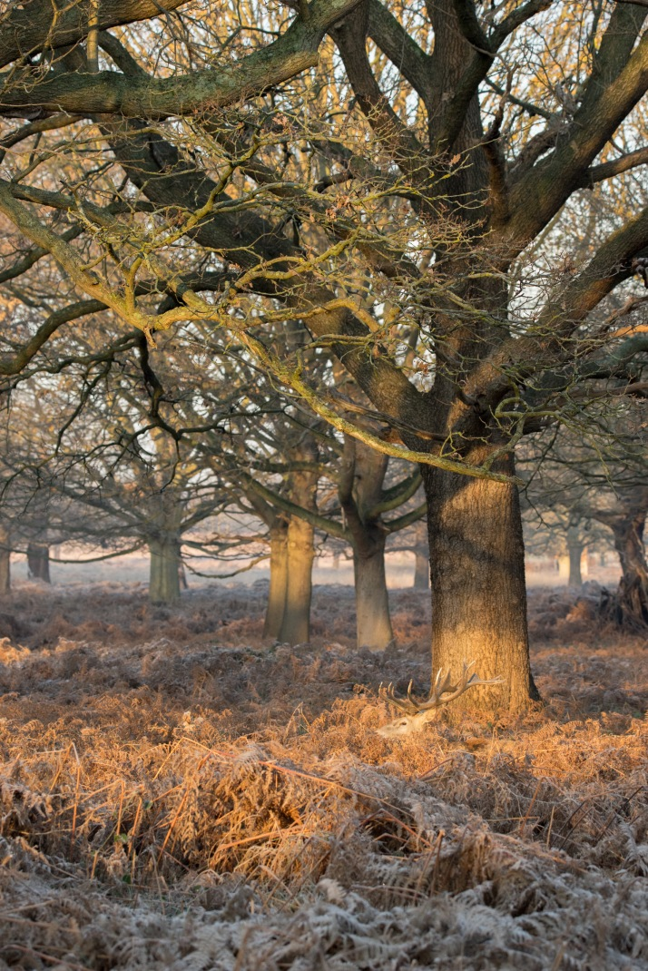 2017-12-12 - Richmond Park-026