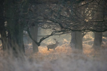 That's the shot I wanted!, Richmond Park, 12/12/2017
