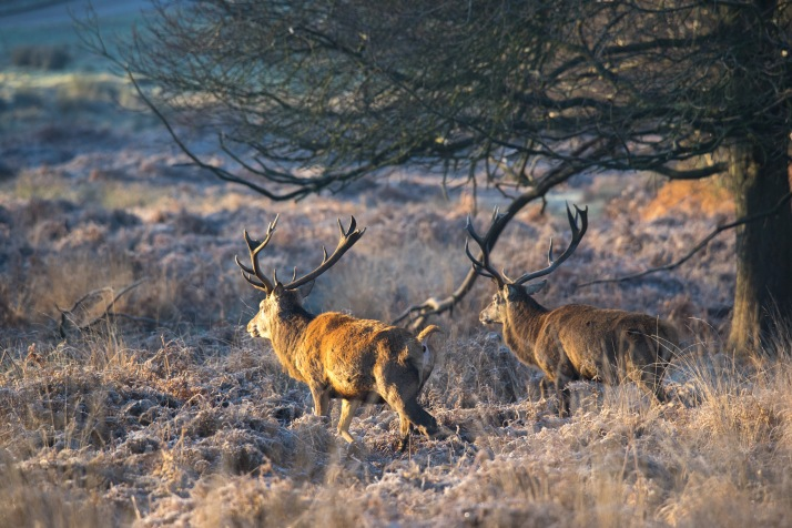 2017-12-12 - Richmond Park-036
