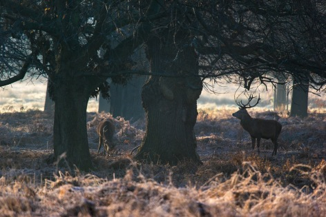 ??:??, Hiding in the shadows, Richmond Park, 12/12/2017