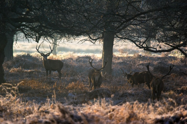 2017-12-12 - Richmond Park-039
