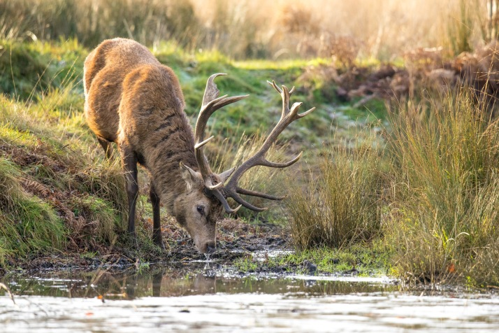 2017-12-12 - Richmond Park-049