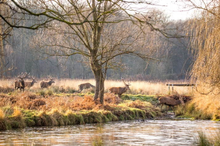 2017-12-12 - Richmond Park-056