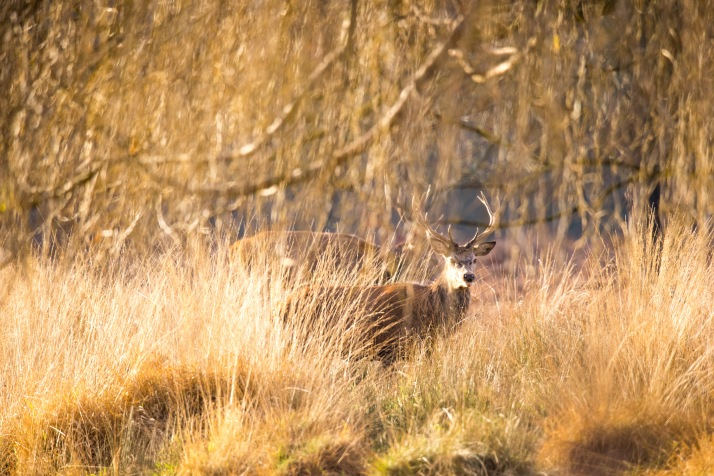 2017-12-12 - Richmond Park-058