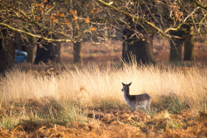 2017-12-12 - Richmond Park-059