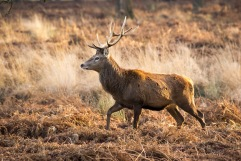 2017-12-12 - Richmond Park-061
