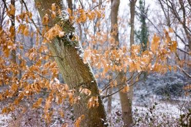 Spring colours?, Epsom Common, Epsom, 02/03/2018