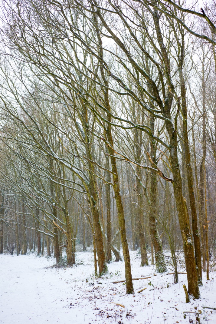 2018-03-02 - Snowy Epsom Common-005