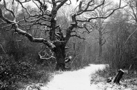 And a black and white, Epsom Common, Epsom, 02/03/2018