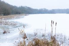 Great Stew Pond, Epsom Common, Epsom, 02/03/2018