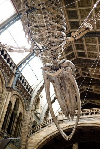 And the view at 06:30 - quite something to wake up under!, Dinosnores, Natural History Museum, 23/03/2018